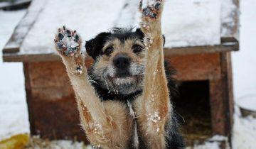 Ar žinai, kaip TU GALI išgelbėti 1200* gyvūnų?