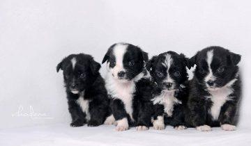 SVARBU: Kada mes nedovanojame šunų?